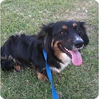Adopt A Pet :: Bonnie - Arlington, TX