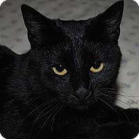 Adopt A Pet :: Ziva - Monroe, NC