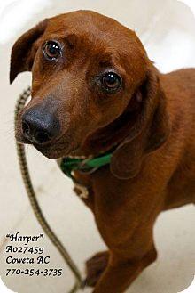 Redbone Coonhound Mix Dog for adoption in Newnan City, Georgia - Harper