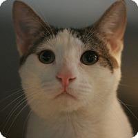 Adopt A Pet :: Chong - Canoga Park, CA