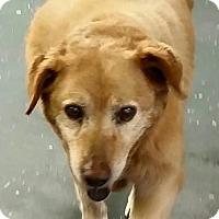 Adopt A Pet :: Sweetie - COLUMBUS, OH