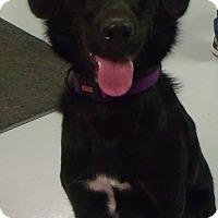 Adopt A Pet :: Kelsee - Muskegon, MI