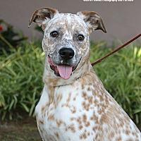 Adopt A Pet :: Donny - Gardena, CA