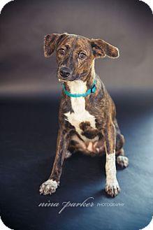 Terrier (Unknown Type, Medium) Mix Dog for adoption in Marietta, Georgia - Diamond