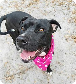 Terrier (Unknown Type, Medium) Mix Dog for adoption in Umatilla, Florida - Sarafina