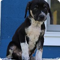 Adopt A Pet :: Vincent - Waldorf, MD