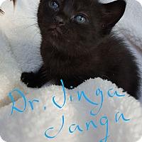 Adopt A Pet :: Dr. Jinga Janga - Overland Park, KS
