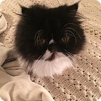 Adopt A Pet :: OREO - INDIANAPOLIS, IN