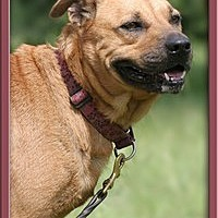 Adopt A Pet :: Daphne - North Fort Myers, FL