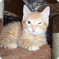 Adopt A Pet :: NOVA - Medford, WI