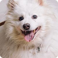 Adopt A Pet :: Orlando - Portland, OR