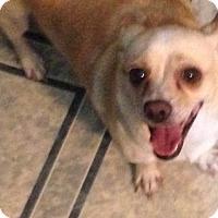 Adopt A Pet :: ! Marci - Colton, CA