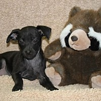 Adopt A Pet :: Enchilada - Brattleboro, VT