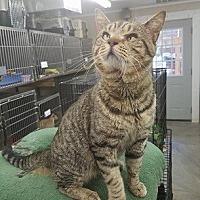 Adopt A Pet :: Keon - Elkins, WV