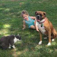 Adopt A Pet :: Daisy KR - Harrah, OK