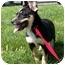 Photo 3 - Blue Heeler/Shepherd (Unknown Type) Mix Puppy for adoption in Shenandoah, Iowa - Mia