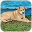 Photo 1 - Labrador Retriever Mix Dog for adoption in Plainfield, Connecticut - Nancy...Reduced fee $300