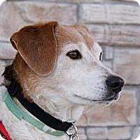 Adopt A Pet :: Drew - Norman, OK