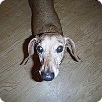 Adopt A Pet :: PUTTER - Atascadero, CA