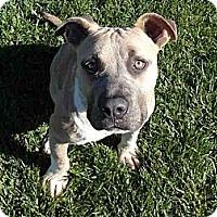 Adopt A Pet :: Ivan SUPER URGENT!!! - Sacramento, CA