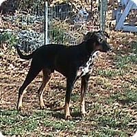 Adopt A Pet :: Beau - Pending - New Richmond, OH