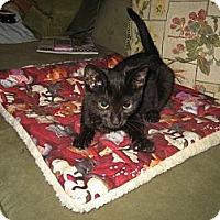 Adopt A Pet :: Raven - Portland, ME
