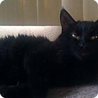 Adopt A Pet :: Little Mama - Orlando, FL