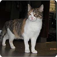 Adopt A Pet :: Kelly - Richfield, OH