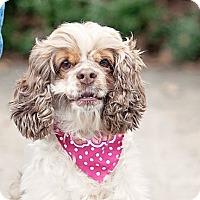 Adopt A Pet :: Madison - Kingwood, TX
