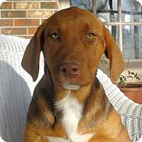 Adopt A Pet :: Gloria - Naugatuck, CT