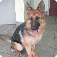 Adopt A Pet :: BINDI - SAN ANTONIO, TX