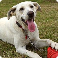 Adopt A Pet :: *Anakin - PENDING - Westport, CT