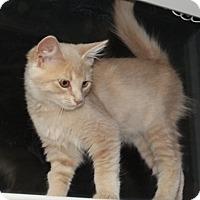 Adopt A Pet :: KaiE - North Highlands, CA