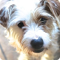 Adopt A Pet :: Ashley and Kassie - Norwalk, CT