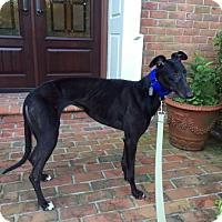 Adopt A Pet :: Marietta - Spencerville, MD