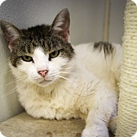 Adopt A Pet :: Poppie - Martinsville, IN