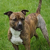 Adopt A Pet :: Tigger - Port Clinton, OH