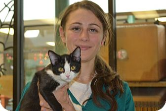 Domestic Shorthair Kitten for adoption in Elyria, Ohio - Starr
