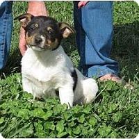 Adopt A Pet :: Trixie - Westbrook, CT