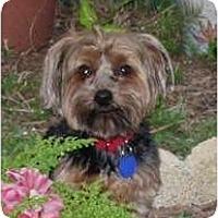 Adopt A Pet :: Digger - Ocala, FL