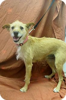 Terrier (Unknown Type, Medium) Mix Dog for adoption in Buena Vista, Colorado - Quartz