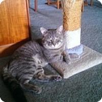 Adopt A Pet :: Fletcher - Vancouver, BC