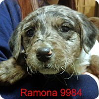 Adopt A Pet :: Ramona - Greencastle, NC