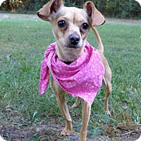 Adopt A Pet :: Bella - Mocksville, NC