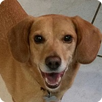 Adopt A Pet :: Dixie - Richmond, VA