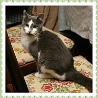 Domestic Shorthair Cat for adoption in Island Heights, New Jersey - Sasha