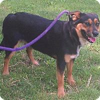 Adopt A Pet :: Alvin - Metamora, IN