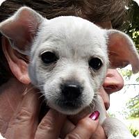 Adopt A Pet :: Maggie - Salem, OR