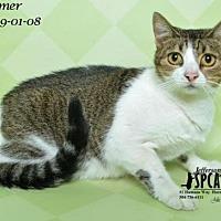 Adopt A Pet :: Summer @ Pets R Our World - Jefferson, LA