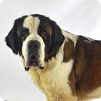 Adopt A Pet :: Zeus 1 - Goodyear, AZ